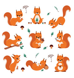 Cute red squirrel holding acorn and sitting on vector