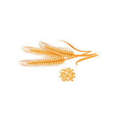 ripe golden wheat grains of which produce bread vector image