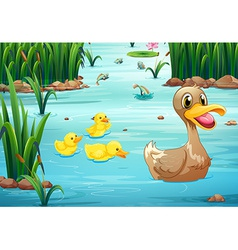 Ducks and pond vector