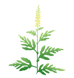 Ragweed plant vector