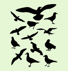 seagulls dove pigeon crow silhouette vector image