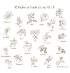 Set of different tree branches vector