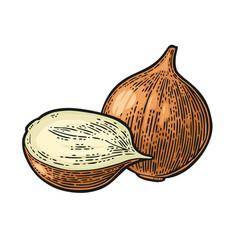whole and half onion black vintage vector image