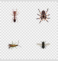 Realistic locust emmet midge and other vector