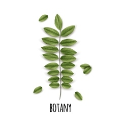 Eco Botany Poster vector image