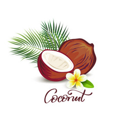 coconut and plumeria flower vector image