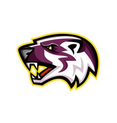 american badger mascot vector image