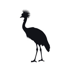 black silhouette african grey crowned crane vector image