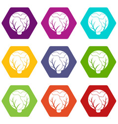 cabbage icons set 9 vector image