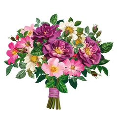 bouquet of wild rose and of violet roses vector image