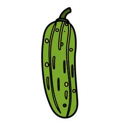 Cucumber vegetable healthy food vector