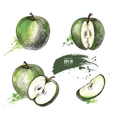 Green apple hand drawn set vector