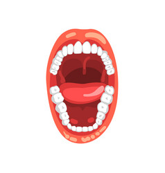 Human teeth open mouth on a vector
