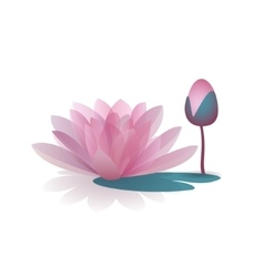 Pink waterlily flower isolated on white background vector