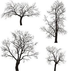 Walnut and chestnut trees vector