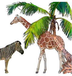 background with zebra giraffe and palm tree vector image