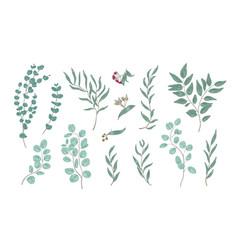 bundle elegant detailed drawings various vector image