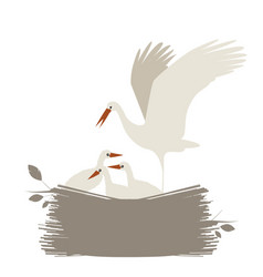cute nest storks isolated on white background vector image