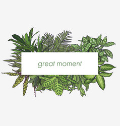 exotic tropical leaves frame vector image