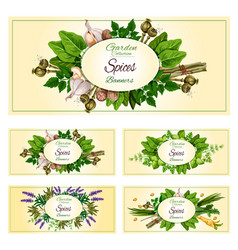 Fresh herbs spices and condiments banner set vector