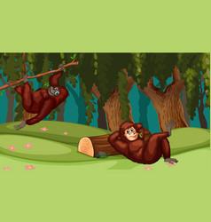 Orangutans in jungle scene vector