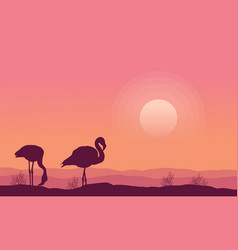 silhouette flamingo scenery collection stock vector image