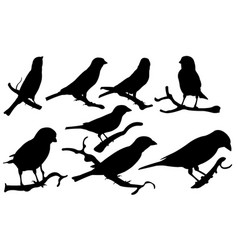 set of sparrows on branches vector image vector image