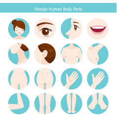 Female human external organs body set vector