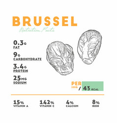 nutrition facts of brussel hand draw sketch vector image