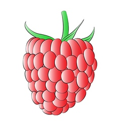 Red Raspberry vector image