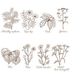 Set of medicinal plants in hand-drawn style vector