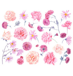 set watercolor chrysanthemums and roses vector image