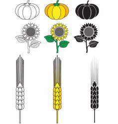 Sunflower pumpkin wheat vector
