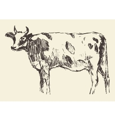 Spotted cow dutch cattle breed hand drawn sketch vector image vector image