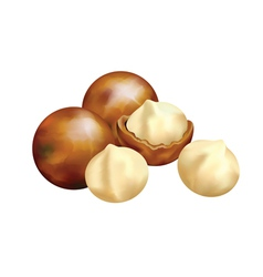 nuts of macadamia vector image