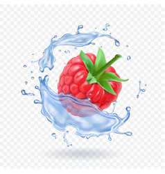 ripe raspberry sweet berry and water splash vector image