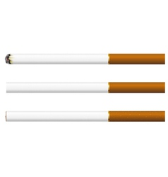 Cigarettes on a white background vector image
