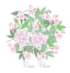 Flowers and white pink peonies vector image
