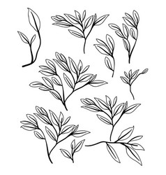 natural branch and leafs pattern background vector image