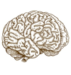 engraving brain vector image