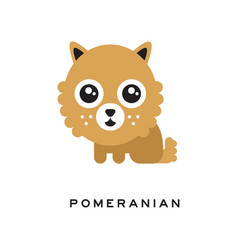 adorable pomeranian spitz puppy with big fluffy vector image