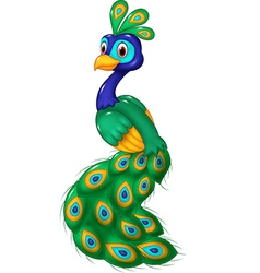 Cute peacock cartoon isolated on white background vector image