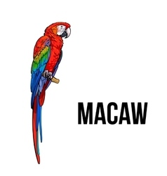 Hand drawn red green-winged macaw parrot vector image