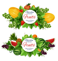 harvest and garden fruits food vector image