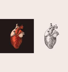 Red heart organ human biology anatomy vector