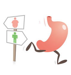stomach running and fat and slim figures vector image