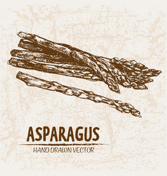 Digital detailed line art asparagus vector