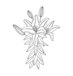 lily flower modern botanical drawing for pattern vector image