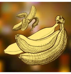 Bananas engraving drawing Fruit and food themes vector image