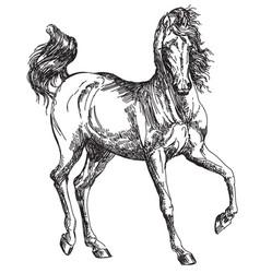 Arabian horse hand drawing vector